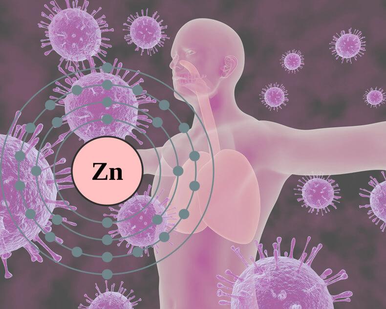 Renforcer le système immunitaire – c'est ainsi que vous traversez le froid